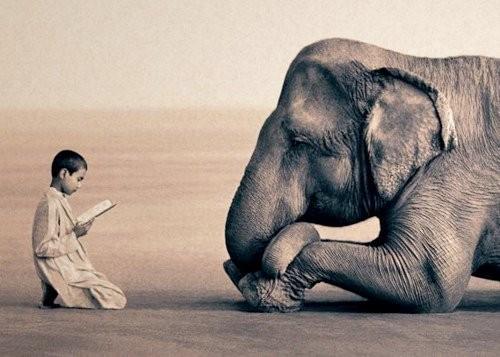 Мальчик читает сказку внимательно слушающему его слону