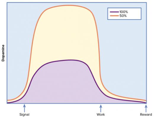 Результаты эксперимента по наблюдению уровня дофамина в процессе выполнения привычного действия